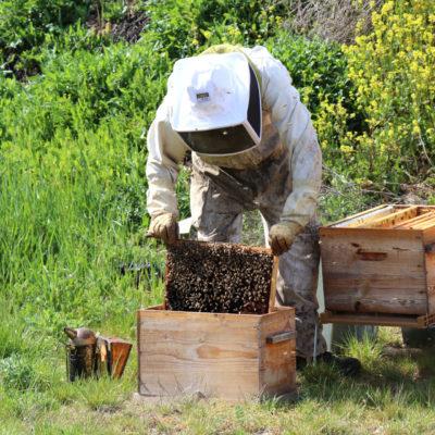 Des ruches au siège des Transports Cordier